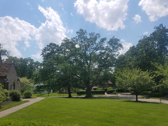 N Red Oak