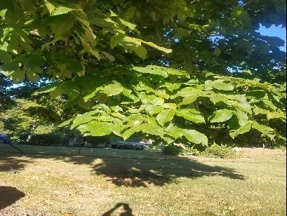 Tree Pic 1